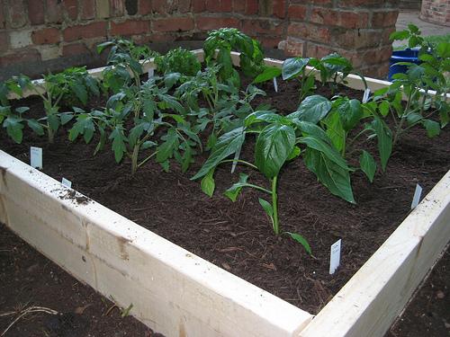 Small Beginner Garden