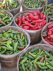 Chili Pepper Harvest