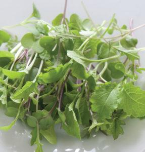 Mild Micro Greens