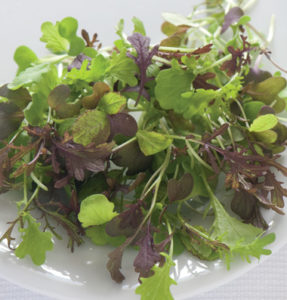 Spicy Micro Greens